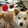 Chained dog in muddy yard