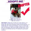 Example adoption poster