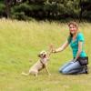 Trainer and dog hi-five
