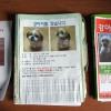 Korean lost dog posters
