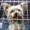 Cody, at the animal shelter in Daegu