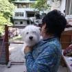 Maltese dog and shelter manager