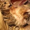 Cody loves kitties