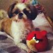 Hahaha Bailey loves Angry Birds too!