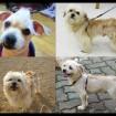 The many faces of Peanut!