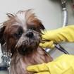 Ginger gets a bath!