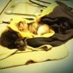 sleeping on my coat