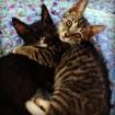 kitten on the left