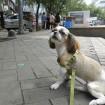 TK going for a walk in Hongdae