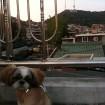 enjoying Seoul Tower