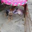 Ilsoon with shelter buddies, Koala & Jam