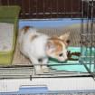 Kitten for adoption in Jeonju, South Korea