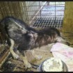 A puppy should not have to live like this. Please help!
