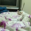 Camo cat!