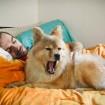 *yawn*