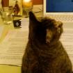 Cleo Studying
