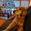 Max has Christmas spirit