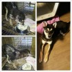 Before and After! Please foster!