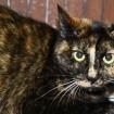 Cat in Jeonju for adoption