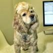 First vet visit