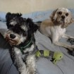 Pepper and her foster brother Wil