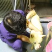 Getting some love from Dr Choi - 22 Aug 2013