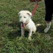 white puppy sitting