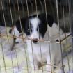 Buzzy Puppy - 29 Sept 2013