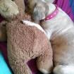 Loves a cuddle buddy