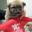 Ari at 7 weeks