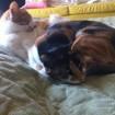 Zyler (orange + white)  + Bella (orange + black)