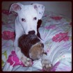 Atlas with his hedgehog