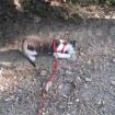 In the park on his leash.