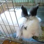 Adopt, Foster, or Sponsor Lovely Lilah!