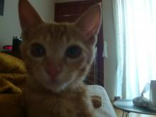 Closeup kitty face
