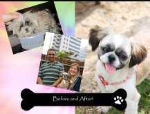 what fostering does to help animals get adopted!