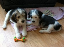 Big Puppy & Little Puppy - see the size difference. We love each other!