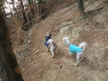 Hobble and Luna hiking