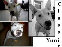 Yuni always was a clown!