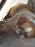 Ginger's feeling a bit sick and low these days. Won't you help return her to health and happiness?
