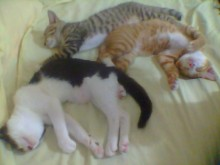 Brody, Quint and Gray sleeping