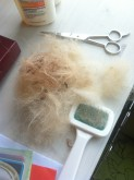 Some of the fur that came off after brushing!
