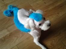 Swag has a blue 'do!