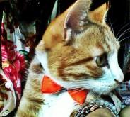 Such a handsome boy^^