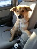 Cruising in the car!
