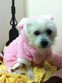 Nobu wearing a pink fluffy bunny suit! <3