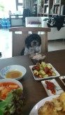 Dog at dinner table