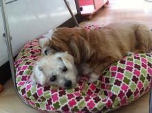 Nobu and Noodle cuddling