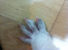 The cutest little foot.
