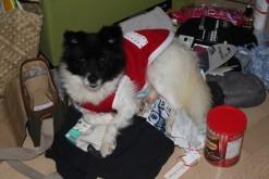 """""""On Christmas I slept on Mom's Christmas present pile. It was comfy!"""""""